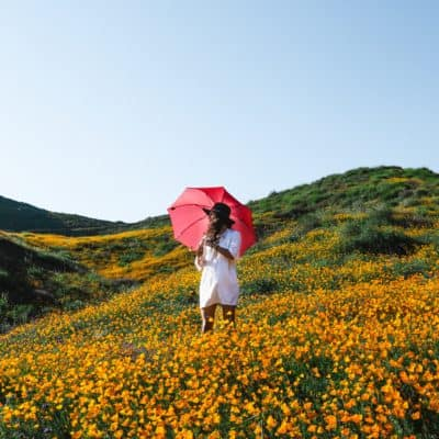 TEN SECRETS TO SURVIVING SEASONAL LIFE CHANGES